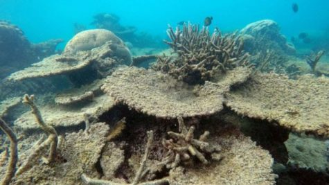 The Death of the Great Barrier Reef is Upon Us
