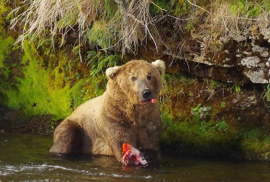 Ms. Gantt Bears her Love (of Bears)
