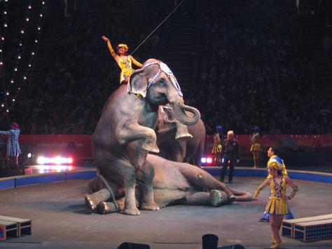 Ringling Bros. Say Goodbye to the Circus Scene After 146 Years