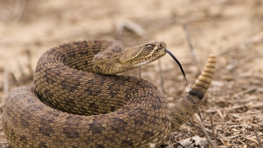 Bill Would Allow For Snakes And Rats To Be Shot In City Limits