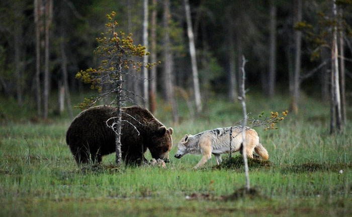 Congress Allows Hunters To Kill Hibernating Animals