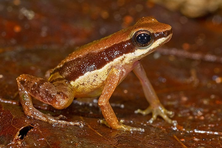 381 New Species Discovered in the Amazon Rainforest