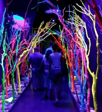 Meow Wolf: The Wierdest Place You'll Ever Go