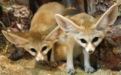 Exotic Animal Interest Booms in China