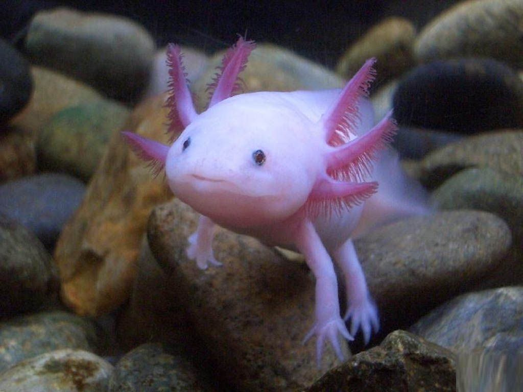 Weird Animals That You Should Totally Adopt