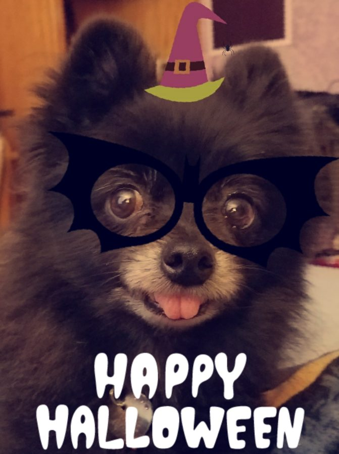 Creepy Canine Friendly Halloween Activities