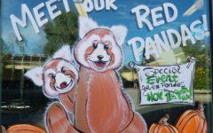New Red Panda at Reid Park Zoo Until Springtime