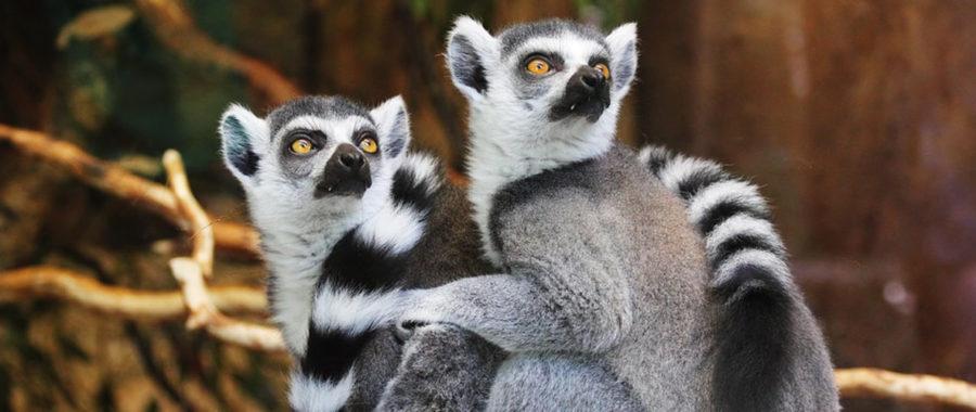 Exotic Animals Stolen From Florida Wild Life Sanctuary