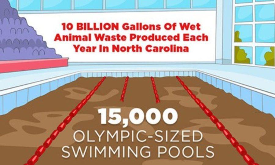 North+Carolina%27s+Pig+Manure+Flooding+the+State