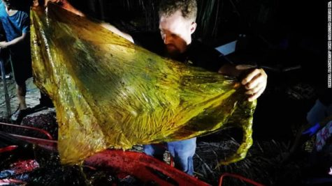 Dead Whale Found With 88-Pounds of Plastic In Stomach