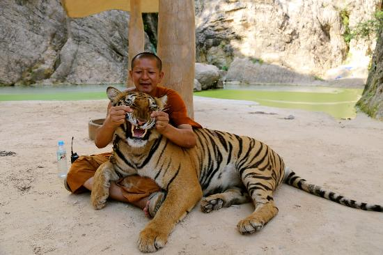 http://www.insighttoasia.com/tiger-temple-a-must-for-tourists-or-a-front-for-animal-abuse/