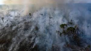 Image result for how much of the world's oxygen does the amazon produce