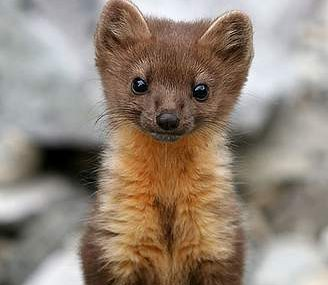 10 Cute Animals You Havent Heard Of