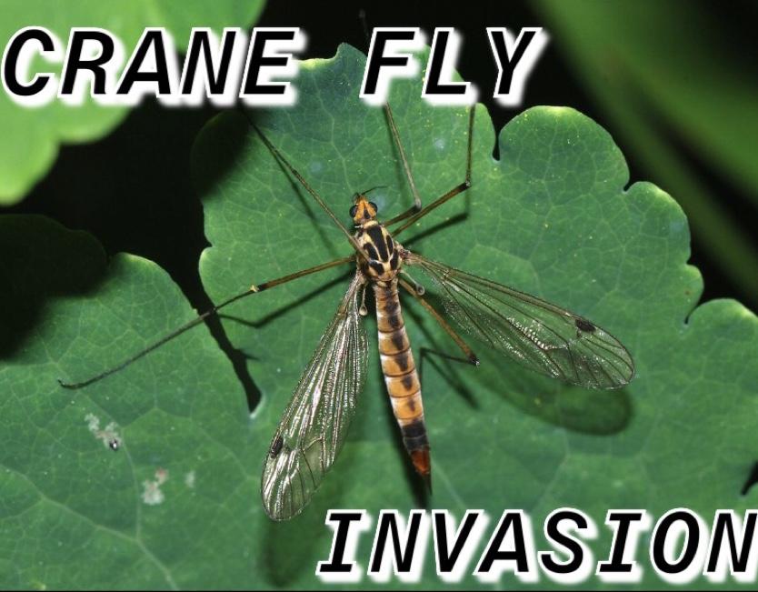 Crane+Flies+on+the+Run