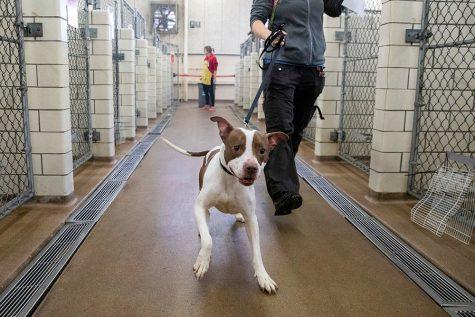 Adopting Dogs During Quarantine