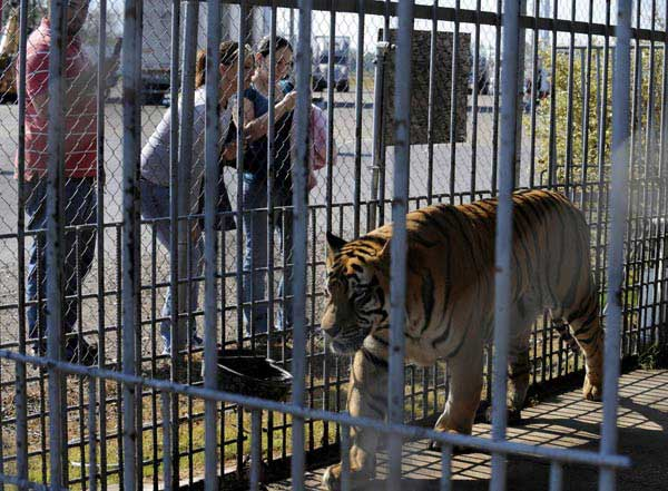 The Hidden Truth About Tiger King And Roadside Zoos