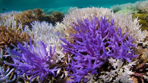 Hope for Our Corals