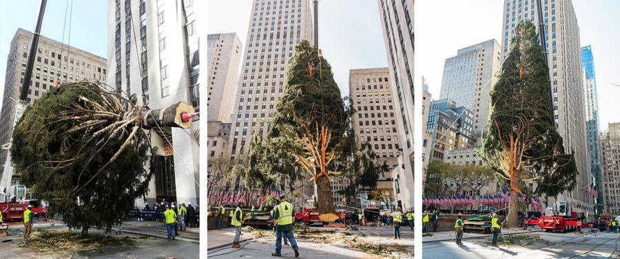 The Rockefeller Center Tree On Brand For 2020