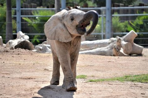 Adorable Baby Elephant Mapenzi Just Turned 1
