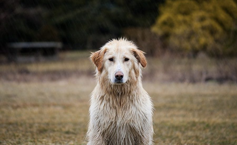 Protect Your Furry Friend During Monsoon
