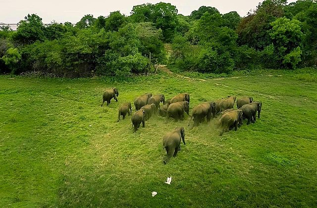 The Mystery Behind Chinas Wandering Elephants Finally Comes To Close