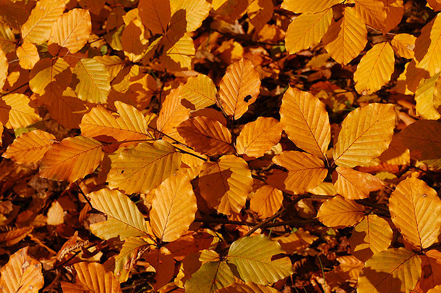 Top 5 Reasons Why Fall is the Best Season