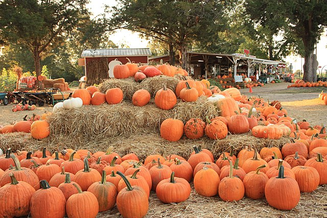 Fun Fall Events To Do in Tucson 2021